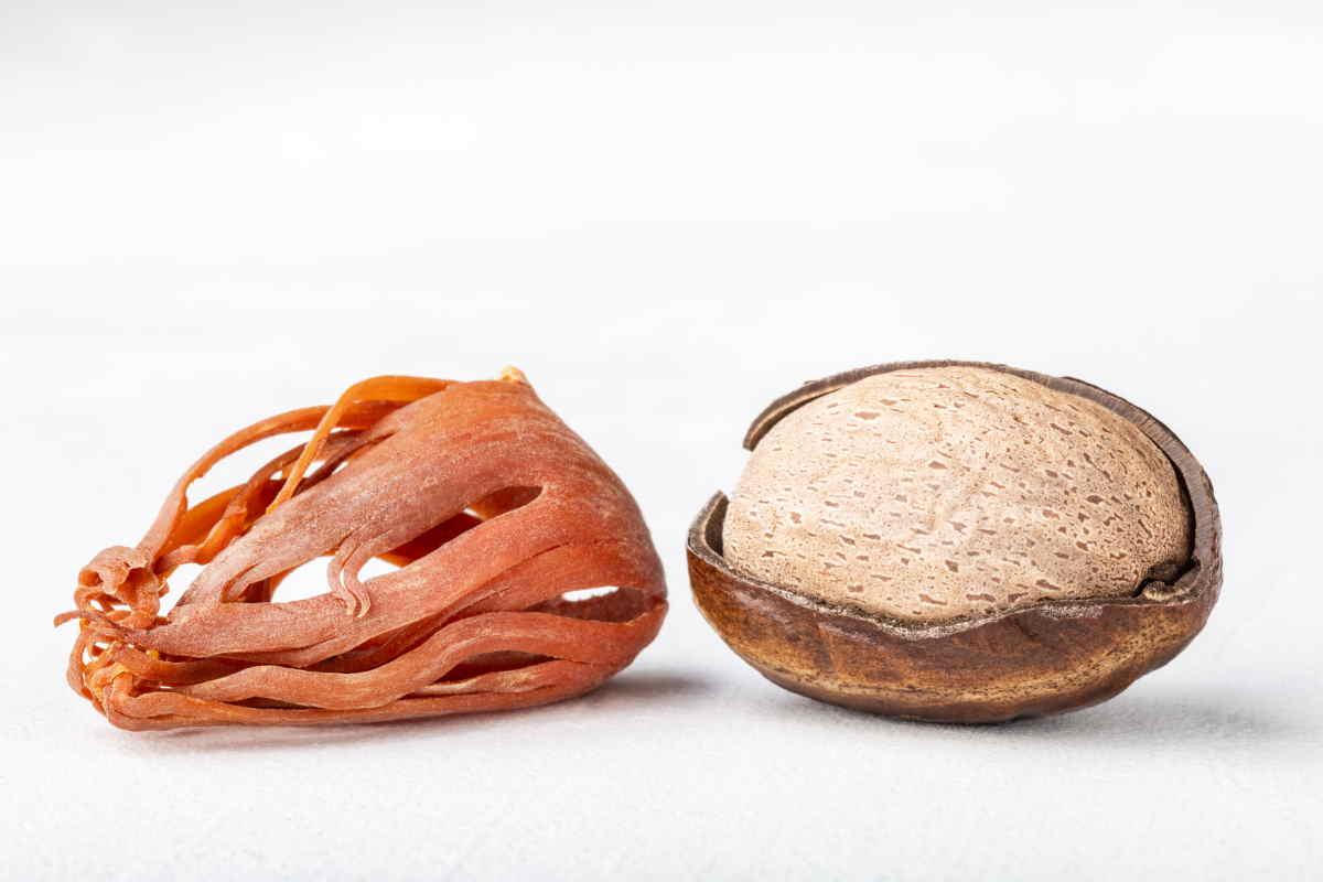 Macis: sapore, proprietà, utilizzo in cucina e dove trovare il fiore della noce moscata