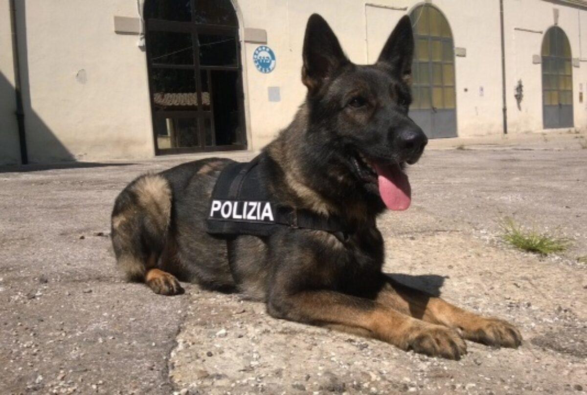 Firenze: pusher con zaino-bazar della droga beccato dal cane poliziotto
