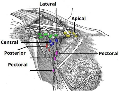 Pubblicato il primo studio scientifico sul confronto tra protesi e innesto di grasso nella mastoplastica additiva.
